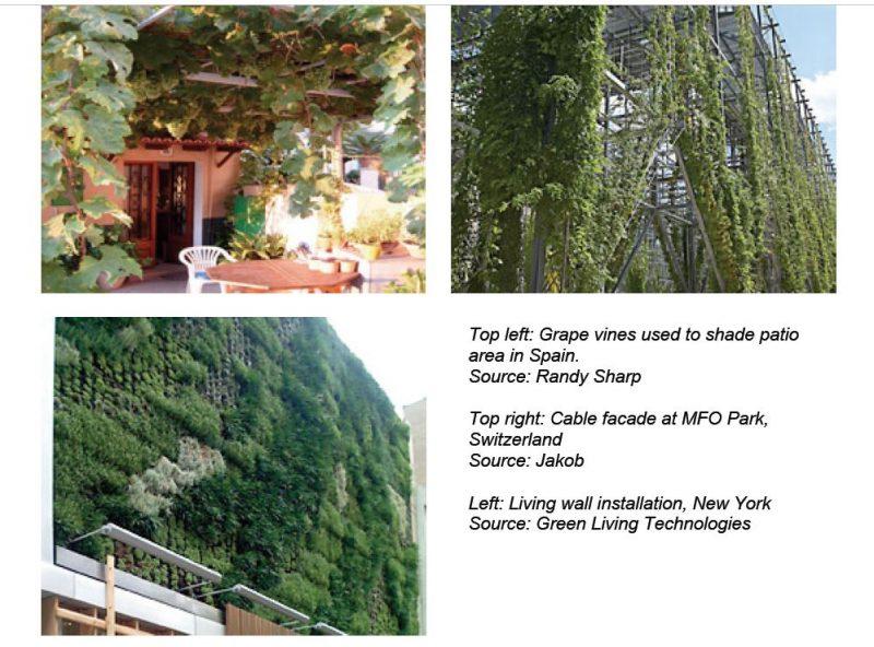 تاریخچه دیوار سبز و استفاده از سازه سبز در روف گاردن