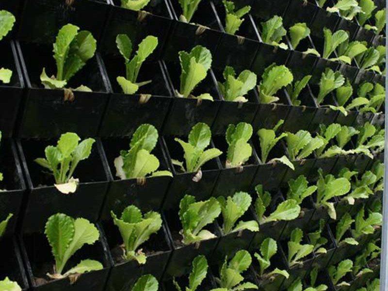 دیوار سبز و نقش آن در کشاورزی