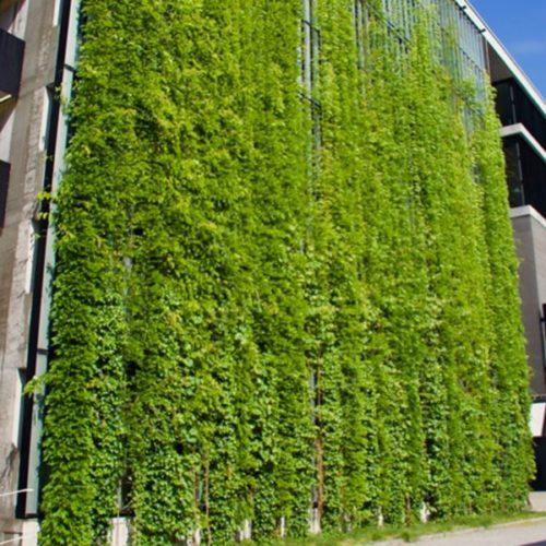 دیوار سبز و زیبایی نمای شهری