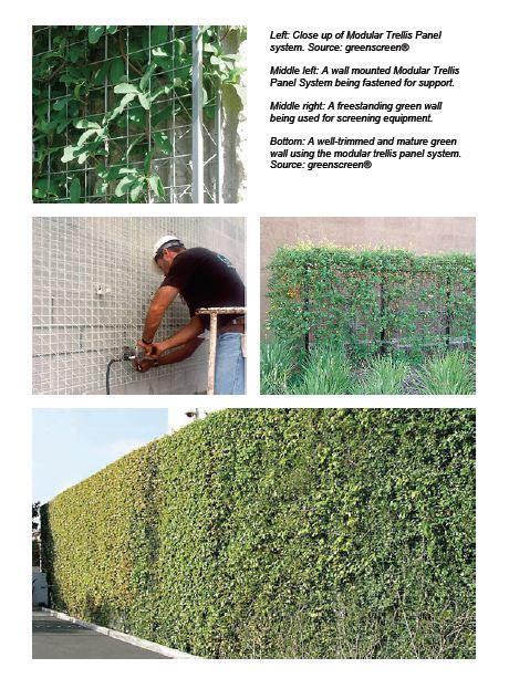 نصب دیوار سبز