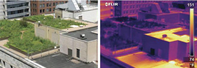 تاثیر بام سبز در دمای هوای سطح شهر