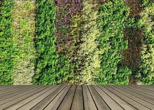 قیمت دیوار سبز مصنوعی