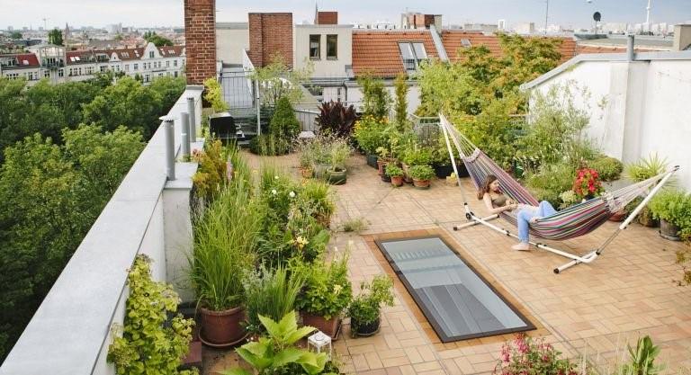 طراحی بام سبز و گیاهان آن